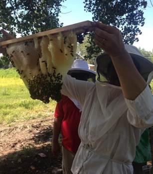 Environment Activities - Bee Keeping