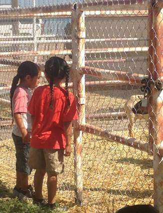 Environment Activities - Learning about the chickens and goats